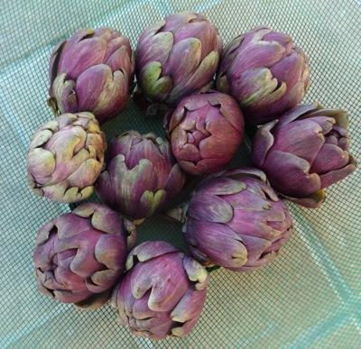 Delicious baby artichokes - in season now !