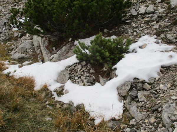 Snow ! Just a little...