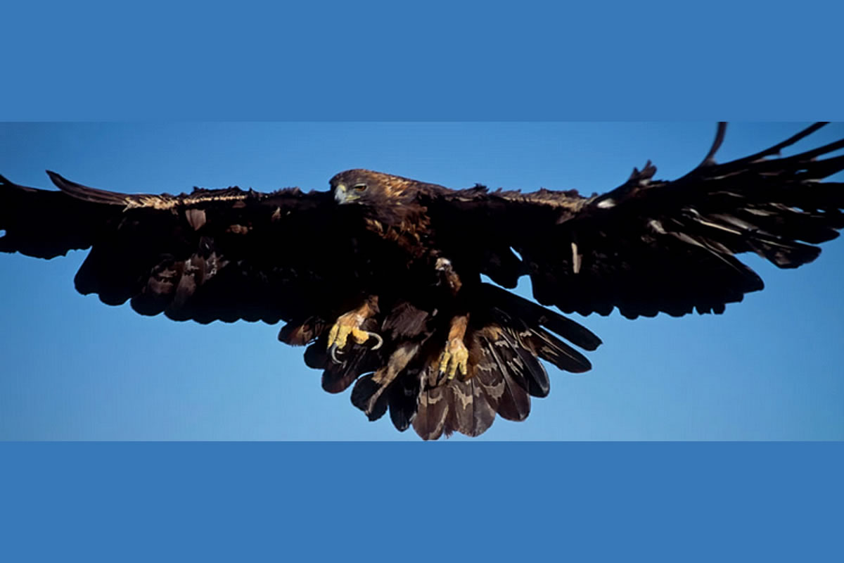 It's not unusual to see Golden Eagles in the skies above Villasfor2