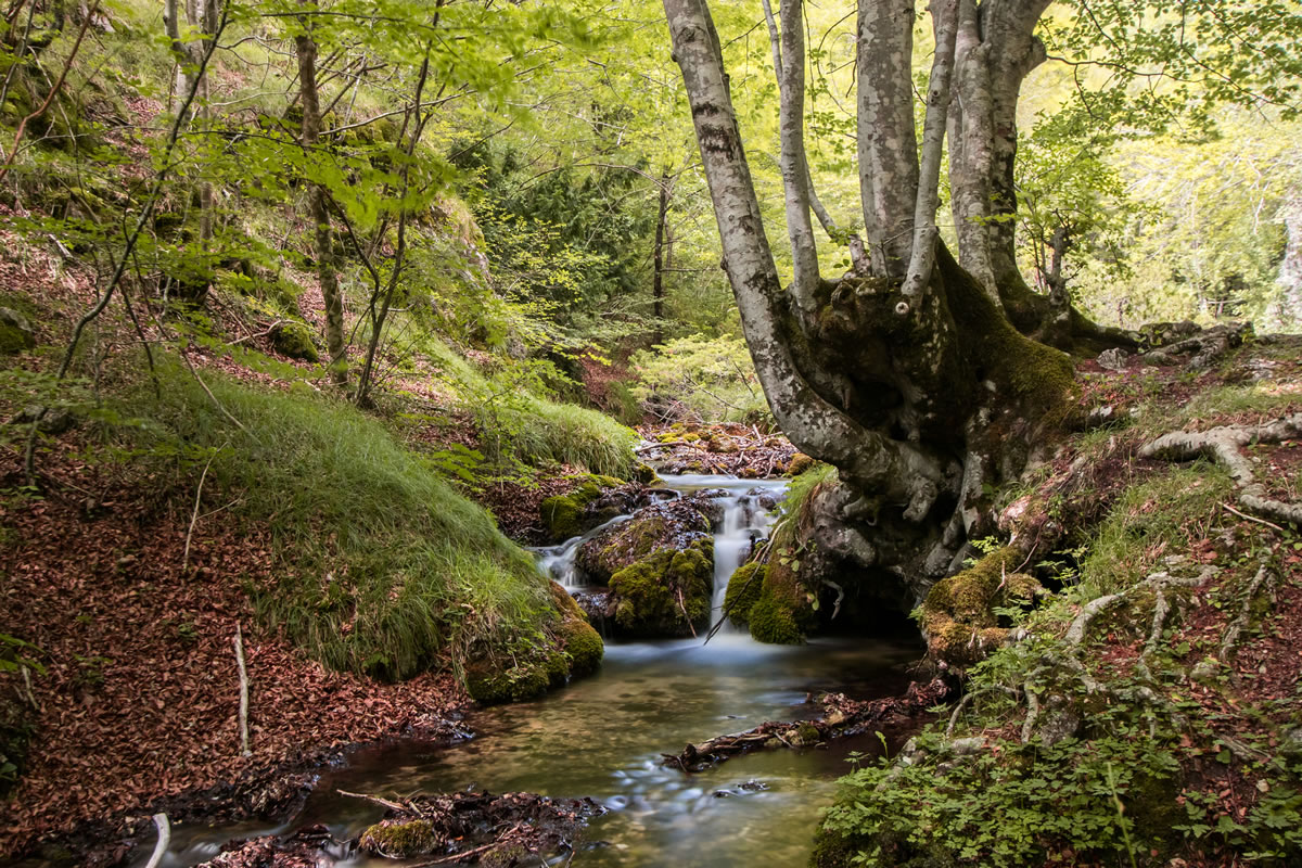 The Majella and Abruzzo National have areas of gentle woodland