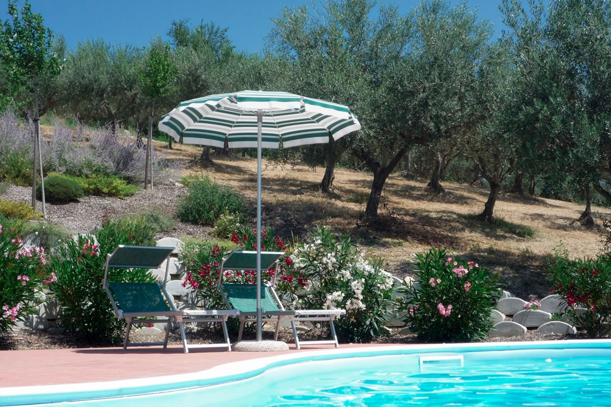 The pool is bordered by olive groves