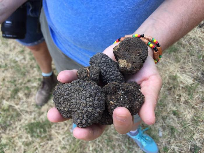Join our secret truffle hunt